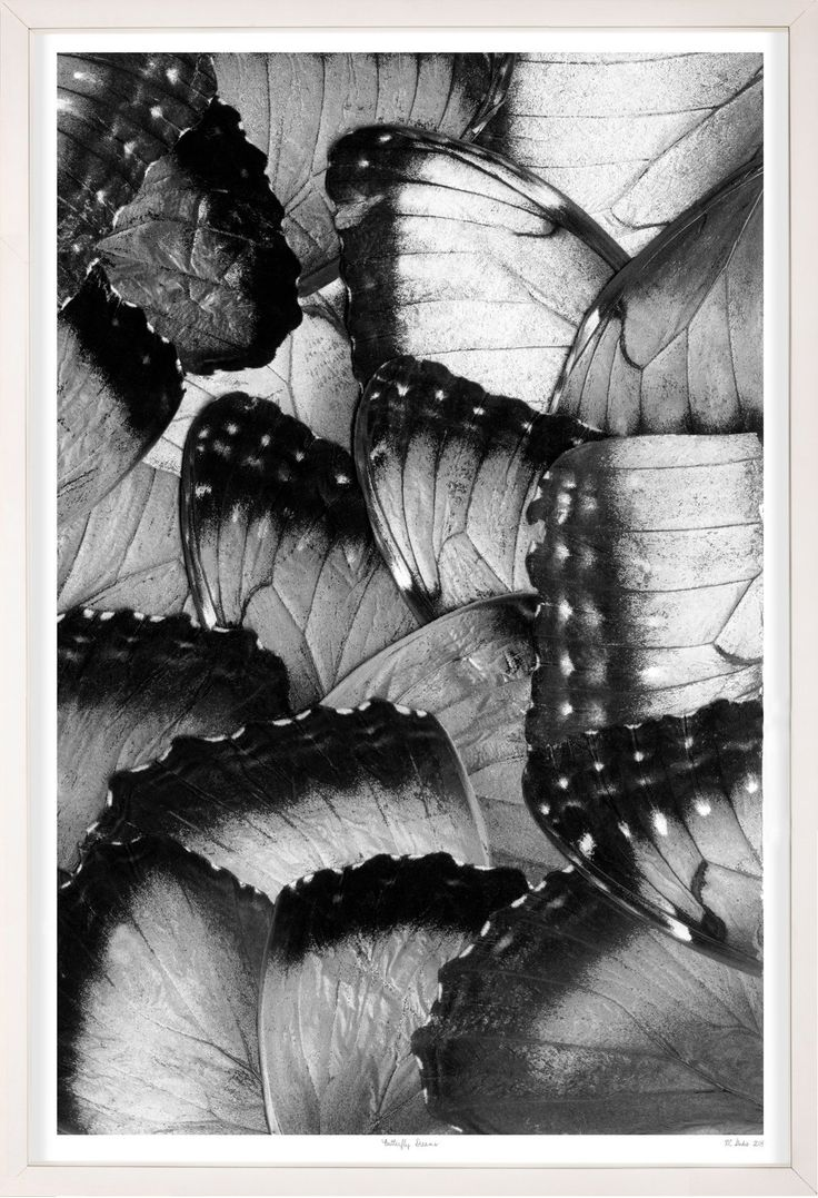 Butterfly Dreams 5A - Natural Curiosities