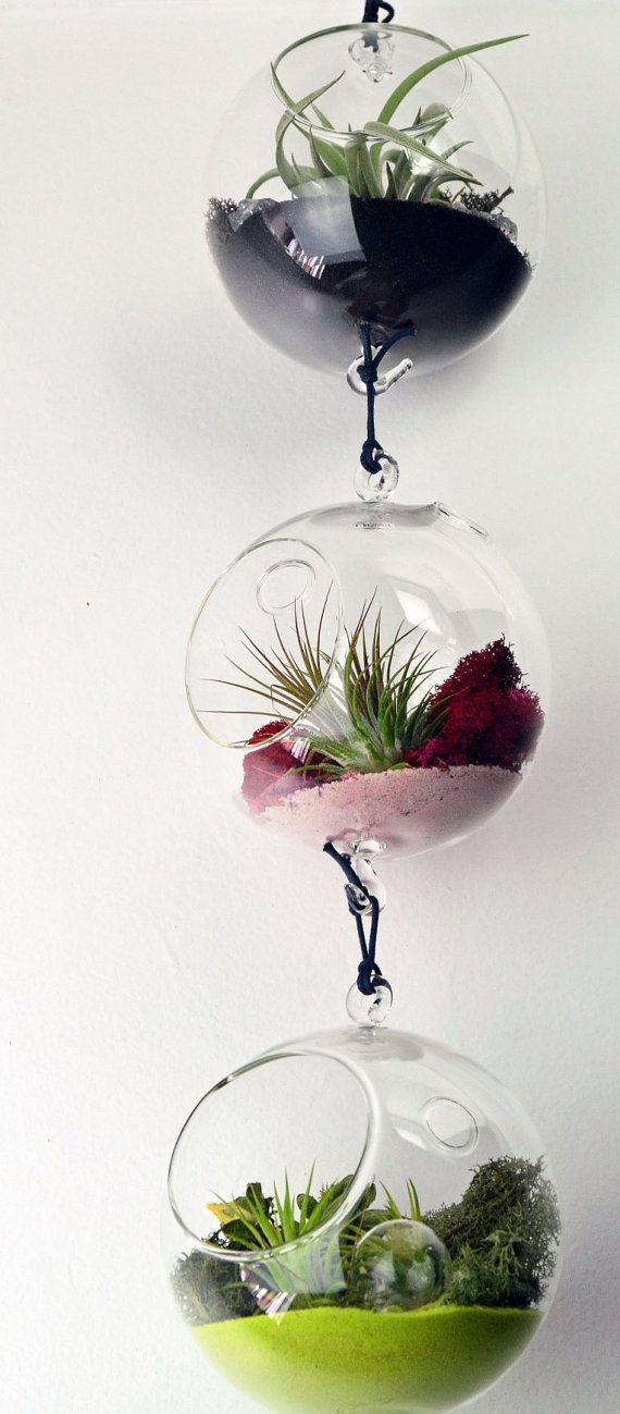 Air Plant Terrarium // Hanging Glass Orb // by PinkSerissa on Etsy, $30.00