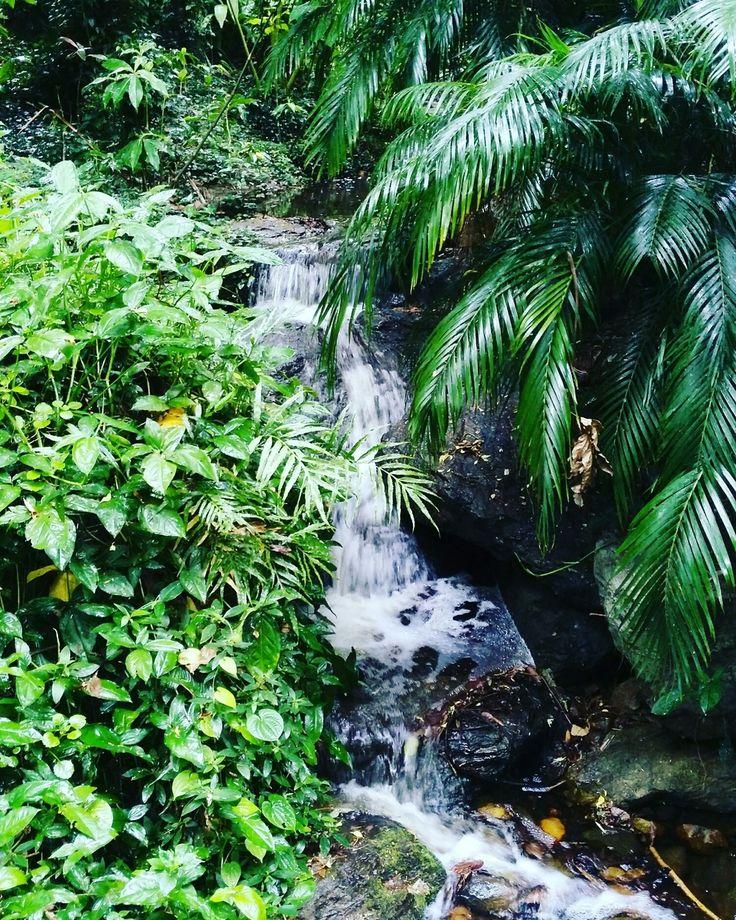 Waterfall - Brisbane botanic gardens