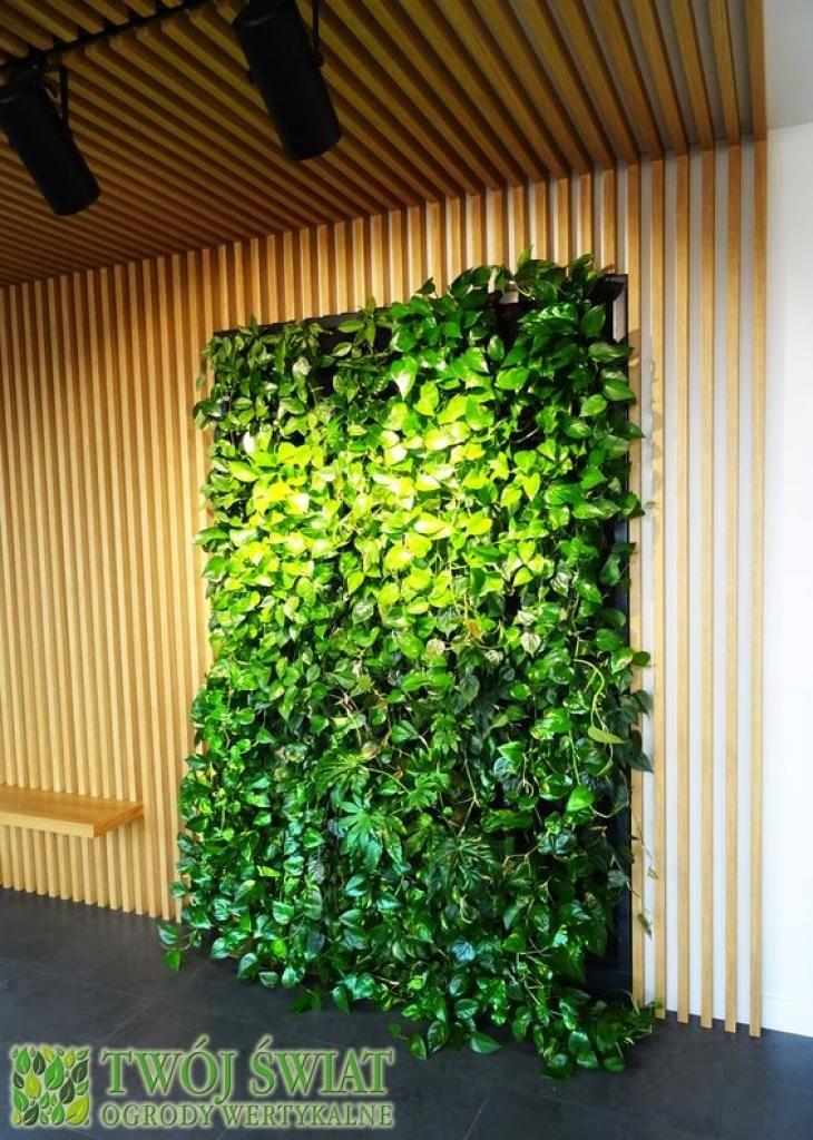 Zielona ściana na tle drewna. #ogrodywertykalne #plantsonwall