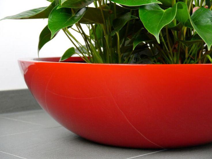Die besten 25+ Pflanzschale Ideen auf Pinterest Pflanzen - pflanzen topfen kubeln terrasse