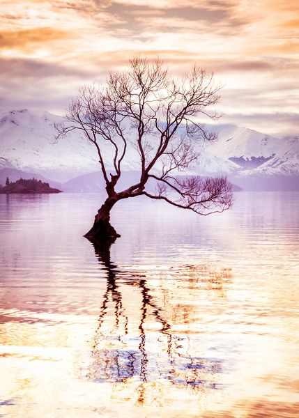 <h2>Peaceful Evening in Wanaka</h2> <br/>I had a peaceful evening in Wanaka. <br/><br/>There is this tree that sits out in the middle of the lake. It's so unusual. I love the way it reflects back on itself in the smooth water. I was by myself, listening to music on my iPod, and just watching the water as it would calm down then get excited, then calm down again. I swapped out lenses a few times and kept moving around to admire it from different angles. This one was one of my favorites. ...