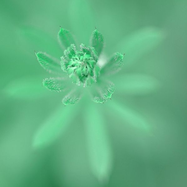Green On Green Spring Sketches Young Grass By Irina Safonova Photograph - Green On Green   by Irina Safonova#IrinaSafonova#Works #FineArtPhotography #HomeDecor#IrinaSafonovaFineArtPhotography #ArtForHome #FineArtPrints #HomeDecor #Flora#Flower