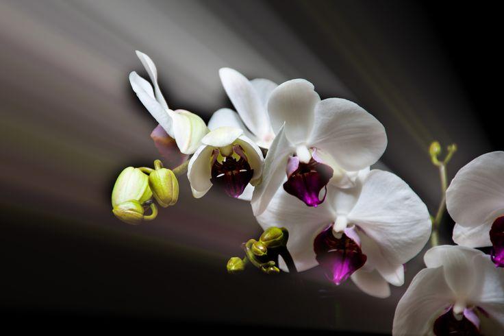 Las plantas domesticas y la iluminación