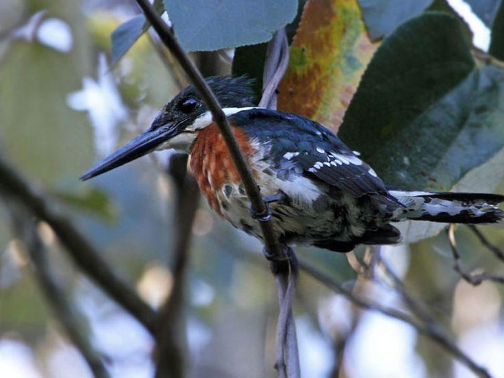 Bird Sanctuaries in Manipur, India @ Sanctuariesindia.com