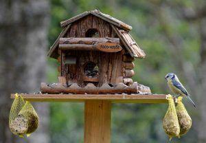Ganzjahresfütterung von Wildvögel