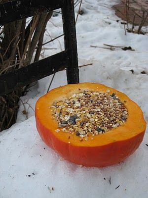 For the birds and squirrels. Probably a mean thing to do when you have cats though.