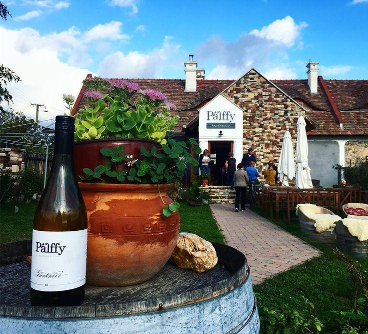Pálffy winery in Köveskál - a stop on a Budapest 101 Wine Tour