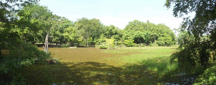 Zoobotânico de Teresina – Piauí - Brasil