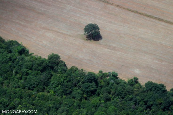 """Brazil's deforestation """"sheriff"""" has been fired. The Amazon is under sustained attack """"on all fronts"""" & we are losing a hugely significant resource, habitat & home to native populations. We must pickup on """"the ante"""" - NOW !"""