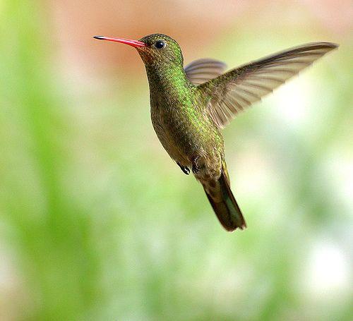 www.digital-photo-secrets.com tip 3228 23-outstanding-hummingbird-photos