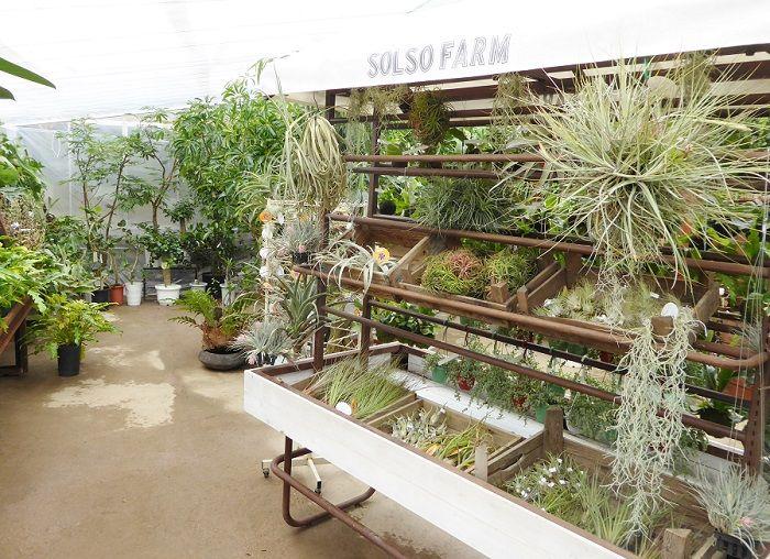 神奈川県川崎市にあるSOLSO FARM(ソルソファーム)。 週末限定でオープンし、いまや幅広い世代が楽しみながらショッピングもできる大人気の植物スポットに。 そんなSOLSO FARM(ソルソファーム)が、 今シーズンもさらにパワーアップし2016年4月1日(金)にリニューアルオープン。