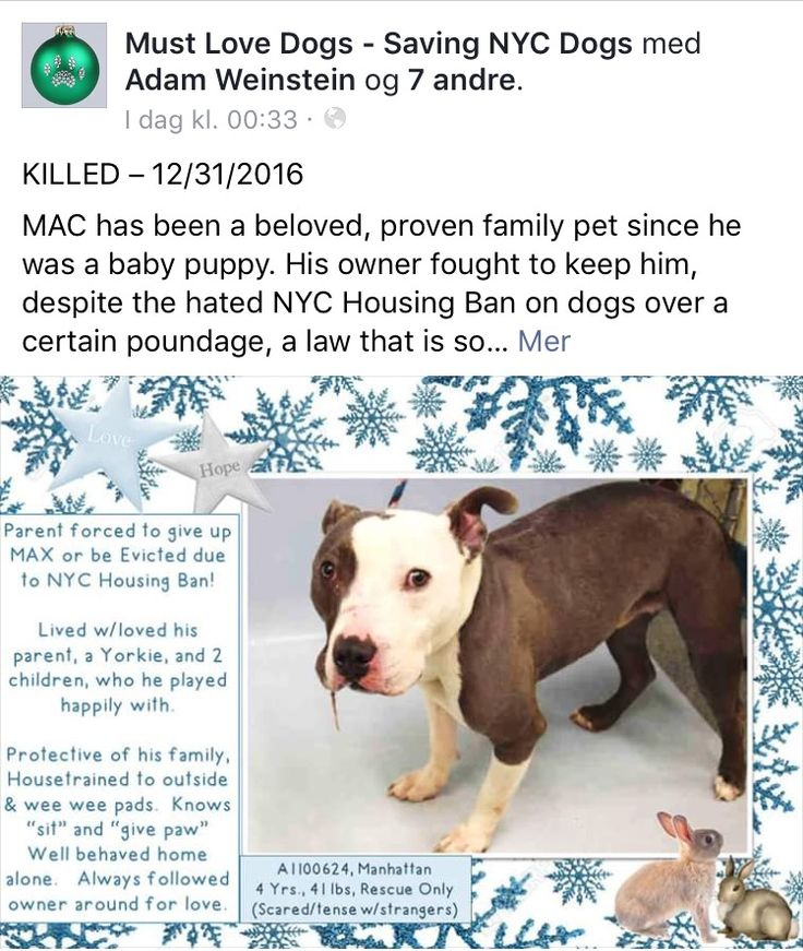 12/31/16 I'M SPEECHLESS AND TOTALLY HEARTBROKEN MURDERED 12/31/16 NYC ACC YOU ARE DISGUSTING MASS MURDERERS AND I REALLY HOPE KARMA FINDS YOU IN 2017 AND GIVES YOU THE WORST PUNISHMENT EVER FOR SUCH DEVILISH EVIL PEOPLE AND ANIMAL HATERS LIKE YOU!! PRETENDING BEING A SHELTER!!!! THIS IS BEYOND EVIL!!! /ij