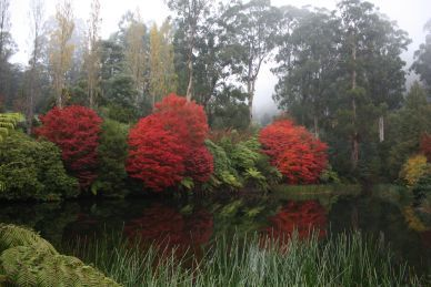 Melbourne WeekendNotes - Free Family Fun Day at Rhododendron Gardens - Melbourne