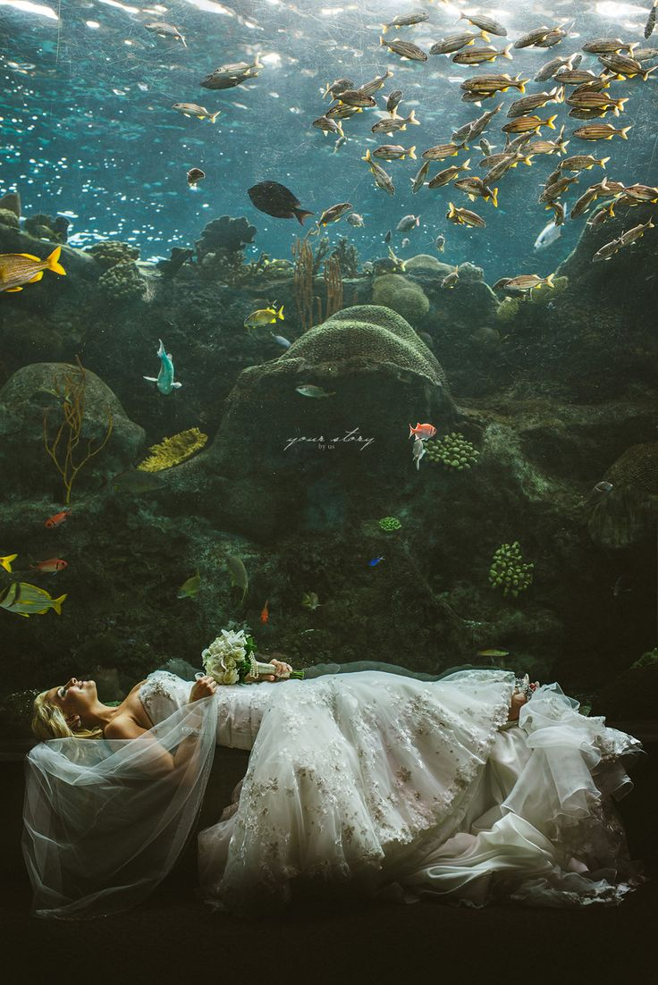 Brooke & Denny's Florida Aquarium Wedding                                                                                                                                                      More