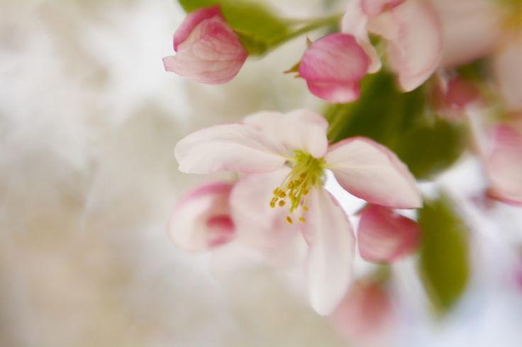 Spring Blossom Whisper by Diane Alexander - Photo 149832611 / 500px