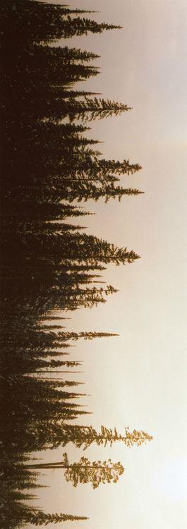 Vertical horizon. Perspective