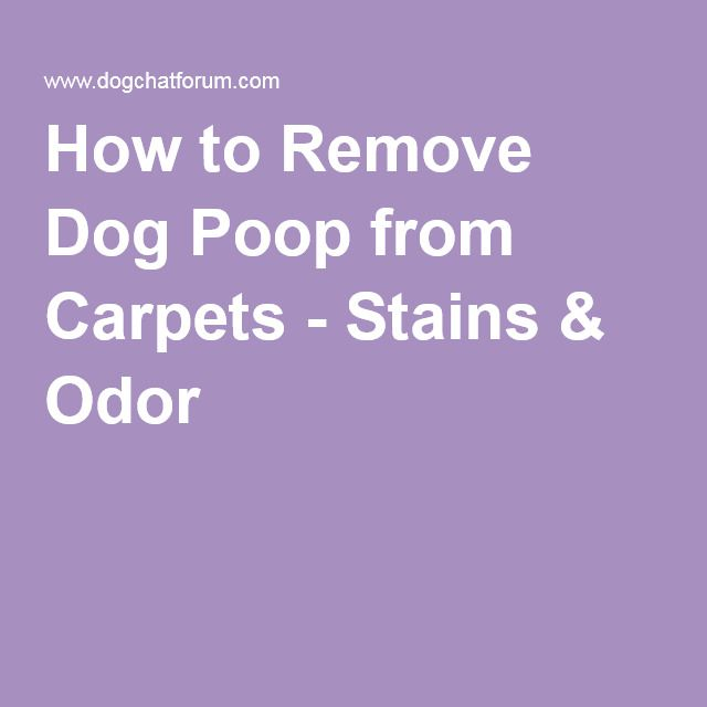 How To Remove Dog Poop From Carpets Stains Amp Odor For