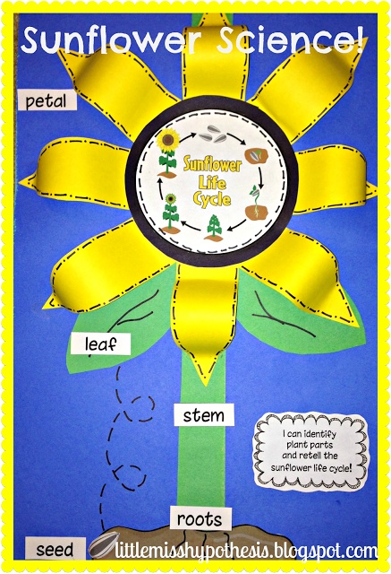 Lessons from the Science Lab I Can Be A Scientist Exploring Life Cycles newly updated Print and Go fun including sunflowers! 214 pages of Science Fun!