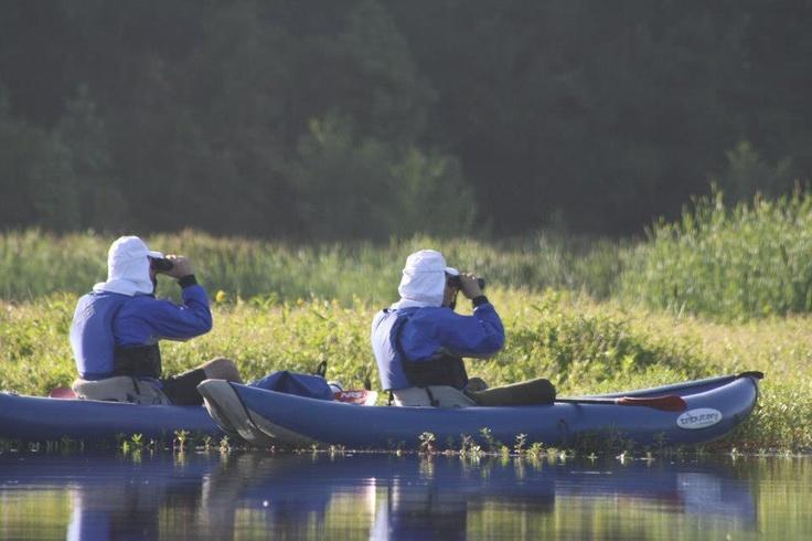 """Tour en Kayak """"Amanecer en el río Cayumapu"""""""