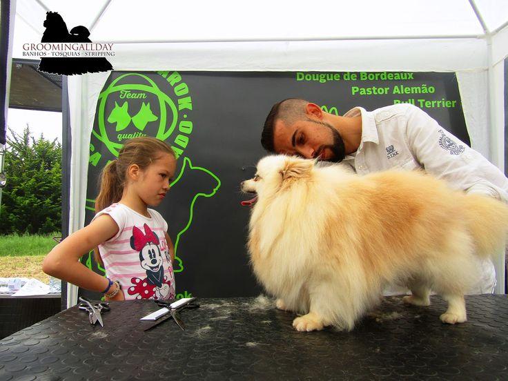 #GroomingAllDay: Spitz by Qta da Bicharada (AnimalFest16)