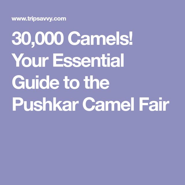 30,000 Camels! Your Essential Guide to the Pushkar Camel Fair