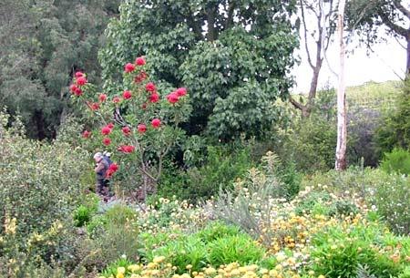 Australian Native Garden Inspiration - Bush gardens and habitat.