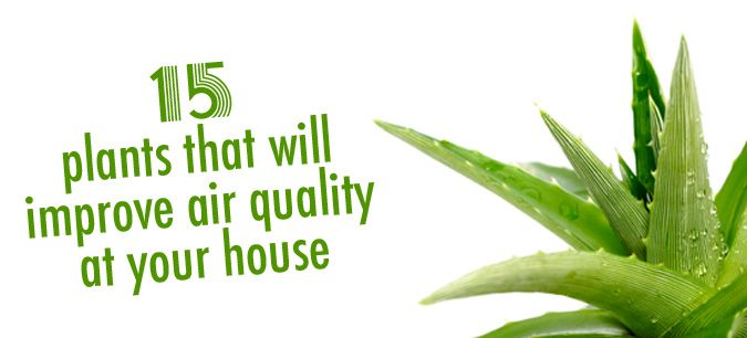 182 best images about medicinal herbs plants on for Indoor plants for better air quality