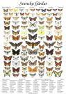 Affisch Fjärilar, skolplansch 50 x 70 cm