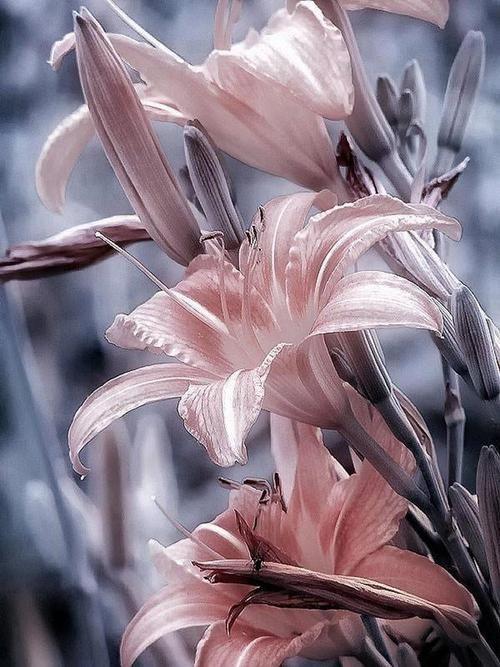 ~~lilies~~