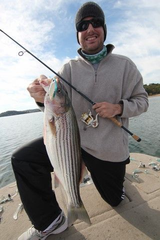 20 best striped bass fishing images on pinterest for Striped bass fishing tips