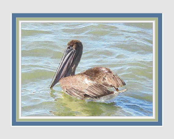 Pelican Mother. Shore Bird Art Photography with Coordinated Printed Faux Mats. Fits into 8 x 10 Frame. Fits Well Into Wall Grouping.