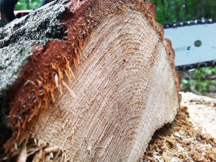 Oak, step 1, wood, nature