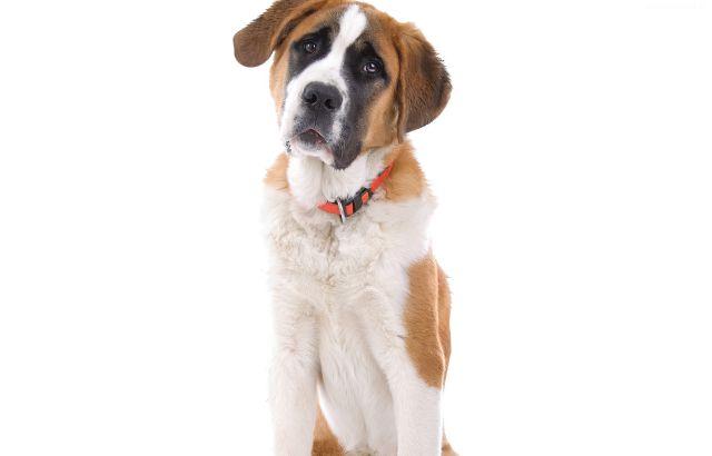 Jaki jest idealny pies dla Ciebie?