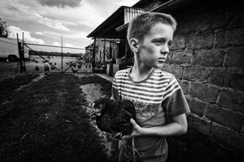on a farm by Monika Strzelecka