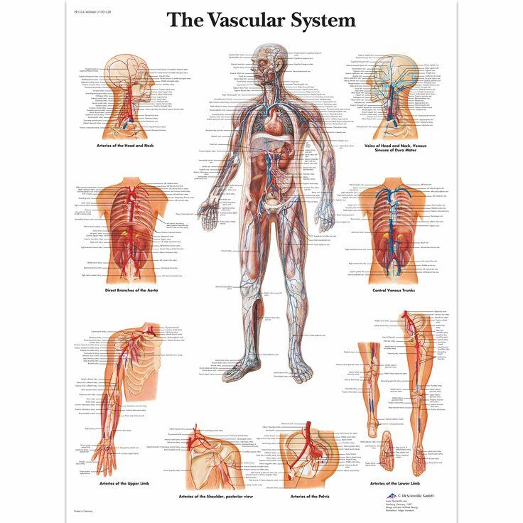 21 besten Back Health Bilder auf Pinterest | Menschliche anatomie ...