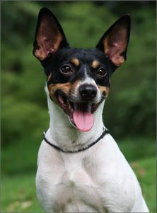 HIs last dog was a rat terrier - a lost dog that my brother rescued and my Father loved dearly - and he loved my Dad back beyond measure.