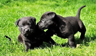 We are here with our expert and experienced puppy development trainer to develop your puppy. So, must meet us.