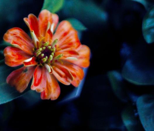 orange, flower, photography