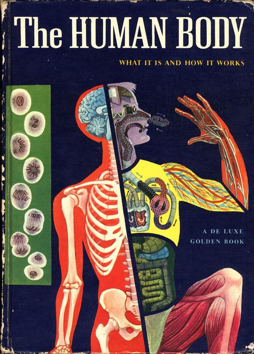 Robert Hunt - The Human Body, illustrations by Cornelius DeWitt
