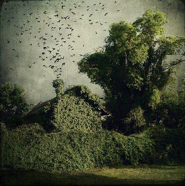 artistic surreal photomanipulation by sarolta ban 30 in Amazing Surreal Photo manipulation by Sarolta Ban