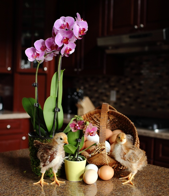 Spring/Easter Decor - Just add eggs!