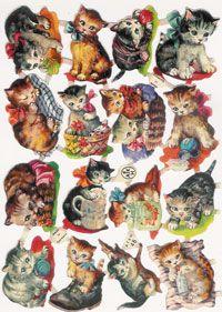 kitties scraps