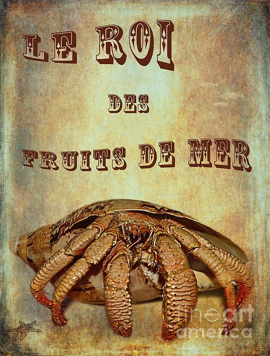 #LE #ROI DES #FRUITS DE #MER #Crab #Photography Quality Prints and Cards at: http://kaye-menner.artistwebsites.com/featured/le-roi-des-fruits-de-mer-kaye-menner.html  -