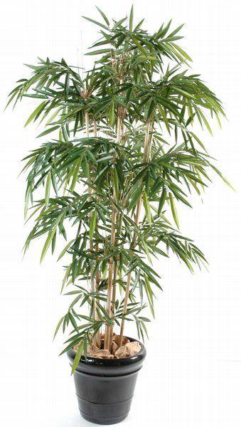 17 meilleures id es propos de plantes artificielles sur pinterest fausses - Achat bambou en ligne ...