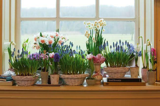 Помнишь ли ты, когда твои любимые вазоны цвели в последний раз так, как в цветочной лавке? Ведь когда заходишь в магазин, просто глаза разбегаются от красочных соцветий.  Секрет роскошного цветения комнатных растений прост: всё живое хочет кушать. Тебе не дождаться пышной листвы и красивого цветен