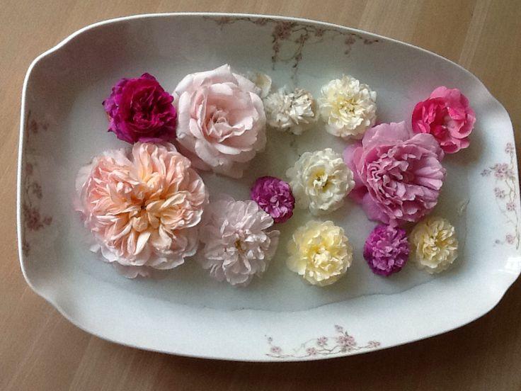 Roser i flor