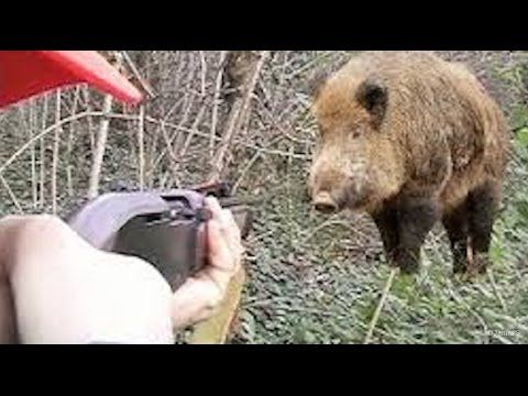 BEST 10 SHOTS WILD BOAR HUNTING Ever | Hunting Wild Boar - funny hunting...