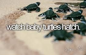 Google Image Result for http://cdnimg.visualizeus.com/thumbs/ad/63/animals,beach,cute,quotes,turtles,vintage-ad63a2205424af517cfbc5a563ef57b...