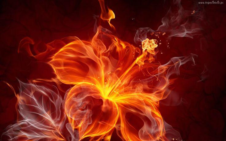 Kwiatek, Ogień, Abstrakcja